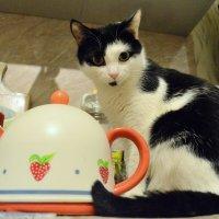 Кошка и чайник :: Марина Кушнарева