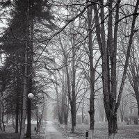 Сырая и мрачная осень :: Юрий ЛМ