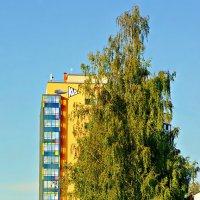 Про деревья :: Екатерина Забелина