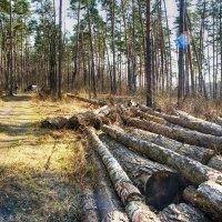 Ромашковский лес 29-03-2020 до самоизоляции.. :: Юрий Яньков