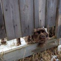 Осторожно во дворе злая собака! :: Андрей Дурапов