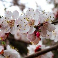 Весна - апрель :: Милешкин Владимир Алексеевич