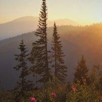 Под утренним солнцем :: Сергей Чиняев