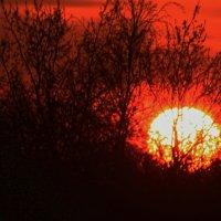Гнездо восходящего солнца  Снято сегодня :: олег свирский