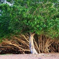 Деревья на озере Караколь. :: Штрек Надежда