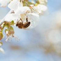 Пчелка :: Оксана Лада