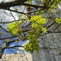 Весна. :: Зинаида