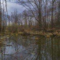Лесной пруд :: Сергей Цветков