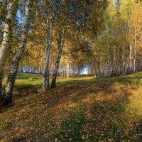 Березовая осень :: Vladimbormotov