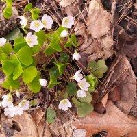 В лесочке , под кусточком , цветочек ... :: Dimos Izgor