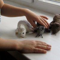 Несуразные и немного неуклюжие мышата стали любимыми героями игр малыша :: Татьяна Смоляниченко