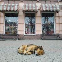 Чай попил - совсем устал ... :: Dimos Izgor