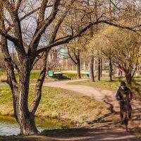 Парк Александрино (Санкт-Петербург) :: Роман Алексеев