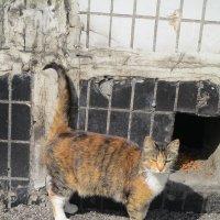 Муся,уличная кошка. :: Зинаида