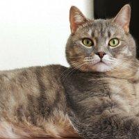 Кот домашний, обыкновенный. :: BOB