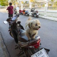2016, Таиланд, Чаченгсау (разбирая архив) :: Владимир Шибинский