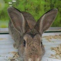 Кролик. :: Зинаида