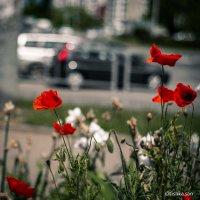 Цветы в городе.... :: Ирина Комолова