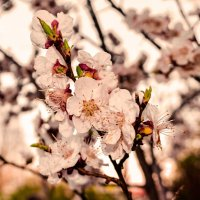 весна :: Гера Dolovova