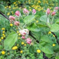 Весна :: marmorozov Морозова