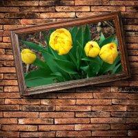 Желтые тюльпаны-2 :: Alexa