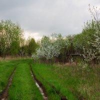Пасмурный весенний пейзаж :: Александр Синдерёв