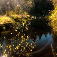 сказочная весна :: Юлия Стальнова