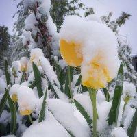 Было лето вчера, а сегодня Зима ... :: Александр Крылов