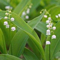 """На лесных опушках весны. Снято на """"Гелиос""""- 44-7 :: Андрей Заломленков"""