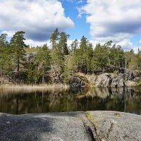 Покой и строгость шведской природы :: Swetlana V