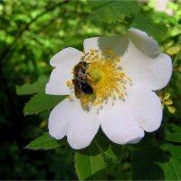 Цветок :: Геннадий Худолеев