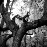 дерево :: Павел Байдин