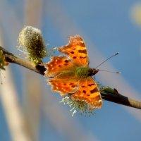 опять про бабочек....7 :: Александр Прокудин