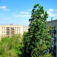 В последний месяц весны :: Raduzka (Надежда Веркина)