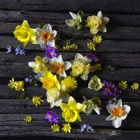 Весенние цветы. :: Master