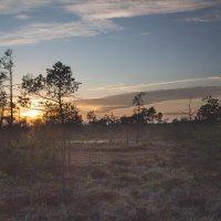 Вечер на болоте :: Инга Энгель