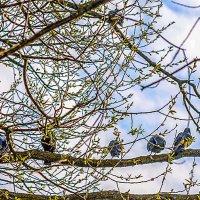 Весна берёт своё... :: Леонид Соболев