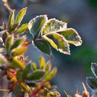 Весна и мороз :: eva