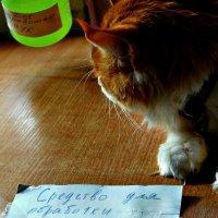 Санни за чистые ручки :: Екатерина Забелина