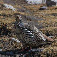 Важная птица :: Александр Россихин