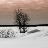 просторы снежнего пейзажа :: Георгий А