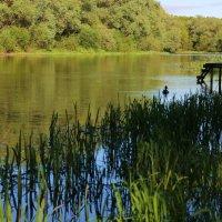 Река Десна :: Нина Костина