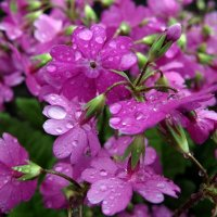 Мокнут под дождём. :: Люба