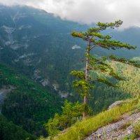 На семи ветрах :: Андрей Козлов