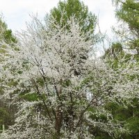 Весна :: Albina Lukyanchenko