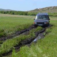 Англичанин,старенький в болотах  речки Зелёной... :: Андрей Хлопонин
