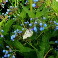 Бабочка :: Дмитрий (Горыныч) Симагин