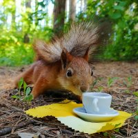 Завтрак в лесном кафе :: nika555nika Ирина