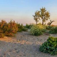 Растительность лиманов :: Нилла Шарафан