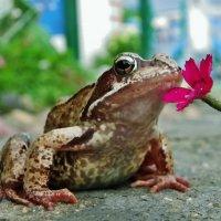 Прекрасный запах у цветка . :: Святец Вячеслав